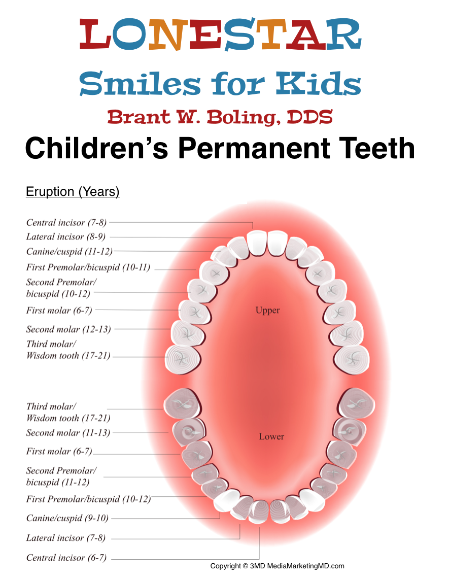 Permanent Tooth Eruption Chart